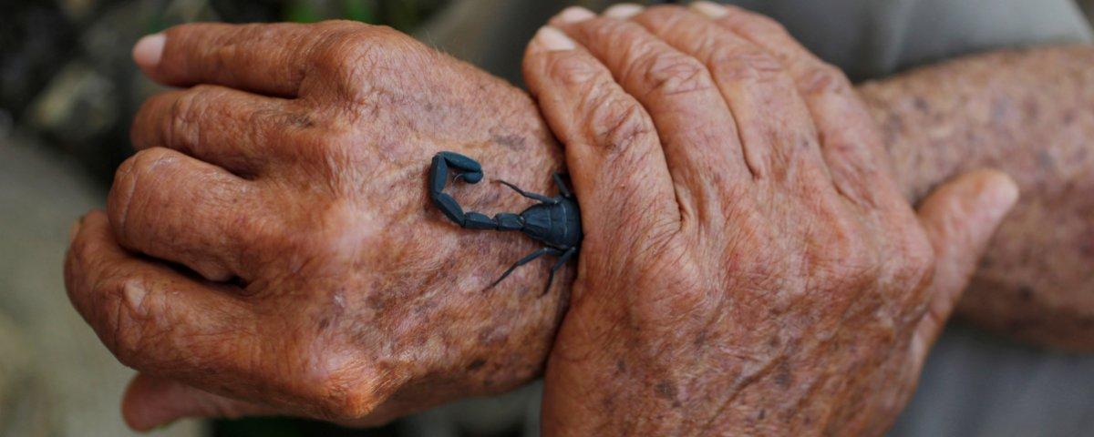 a12dd26ca1cc El veneno del escorpión azul podría usarse como medicina   Cluster ...